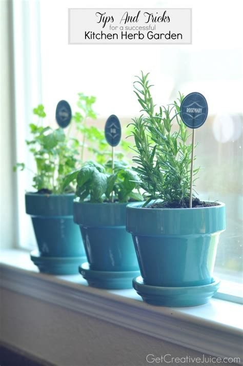 Growing Herbs In Kitchen Window by Tips And Tricks To Maintaining An Indoor Kitchen Herb