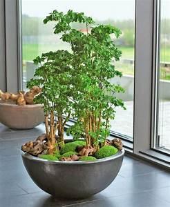 Bonsai Im Glas : die 25 besten ideen zu pflanzen auf pinterest pflanze sukkulenten und sukkulentengarten ~ Eleganceandgraceweddings.com Haus und Dekorationen