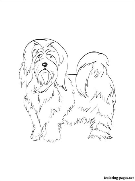 lhasa apso coloring page coloring pages