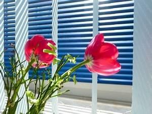 Viele Fliegen Am Fenster : blanke bauelemente berlin jalousie am fenster verena n pixelio blanke ~ Orissabook.com Haus und Dekorationen