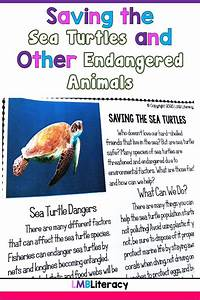 Endangered, Animals, Facts, And, Activities, In, 2021