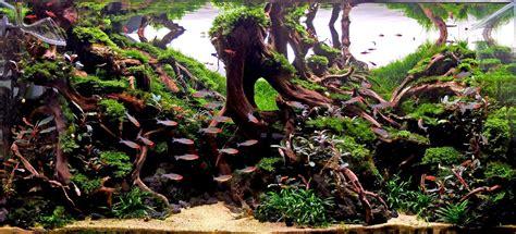 Style Aquascape by Aquascape Ideas 10 Top Aquascape Ideas Aquascape Ideas
