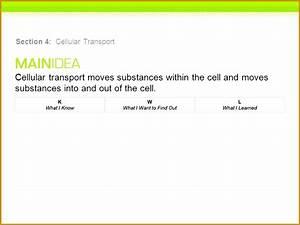 6 Cellular Transport Worksheet