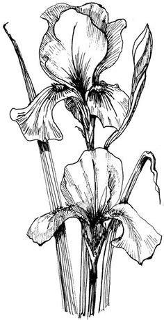 Hydrangea-line | Pinterest | Hydrangea, Drawings and