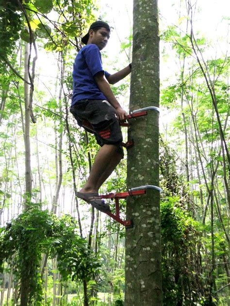 jual alat panjat pohon kelapa pinus jabon sengon