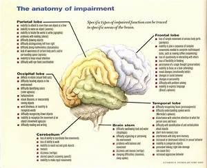 Brain  U0026 Cn U0026 39 S