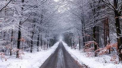 Forest 4k Snow Nature Winter Road During
