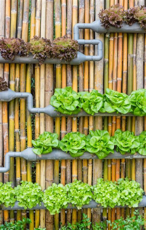 Vertical Gardens How To Build by The Best Diy Vertical Gardens For Small Spaces