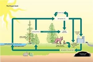 Aisbiology  Licensed For Non  Ecology
