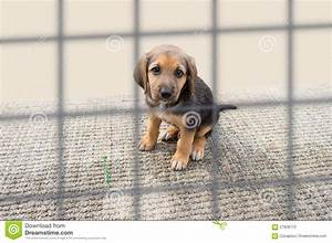 Sad puppy in a kennel stock image. Image of mammal ...
