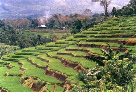 kegiatan ekonomi agraris penduduk indonesia