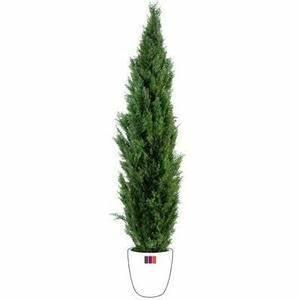 Plante Verte D Exterieur Achat Vente Plante Verte D