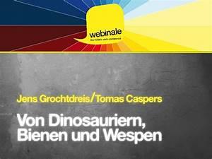 Bienen Und Wespen : von dinosauriern bienen und wespen ~ Whattoseeinmadrid.com Haus und Dekorationen