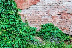 Free Images : plant, lawn, retro, house, texture, flower ...