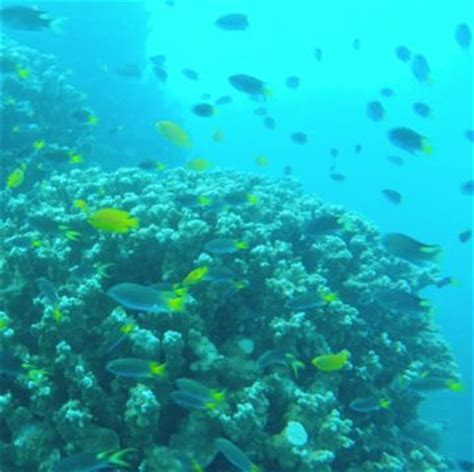 facts   great barrier reef whitsunday escape