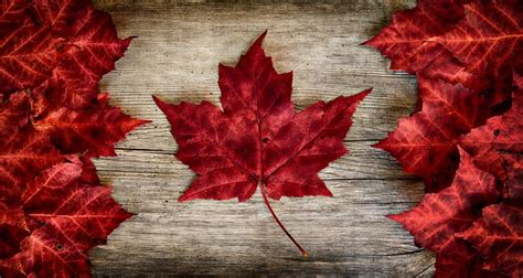 spots  fall foliage viewing  canada