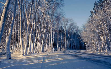 Nature Snow Winter Tree Road Cool Shadow Winter Snow