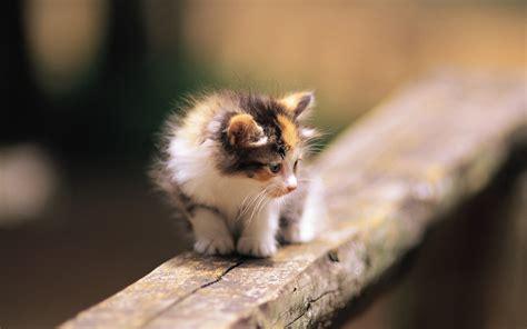 Kittens, Animals, Baby Animals, Depth Of Field, Wood