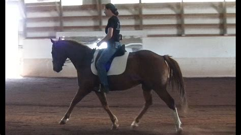 quarter horse dressage paint cross riding