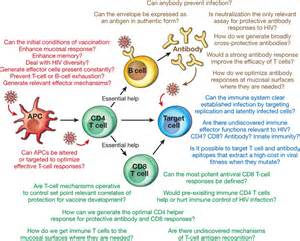 FIGURE 3. Immune responses to HIV and outstanding questions related to ... Immune System/AIDS