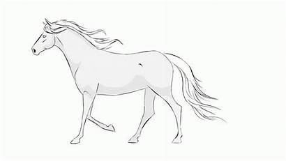 Animation Horse Walk Cycle Hard Flash Whole
