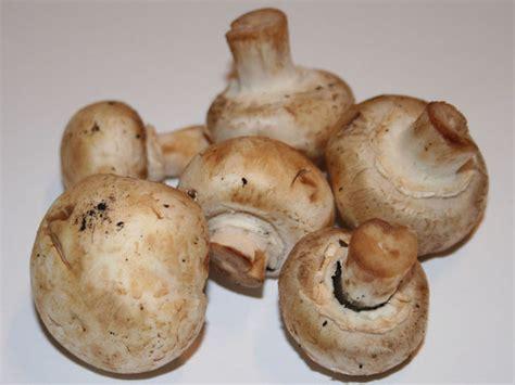 Essbare Pilze Im Garten Züchten by Pilze Selber Z 252 Chten