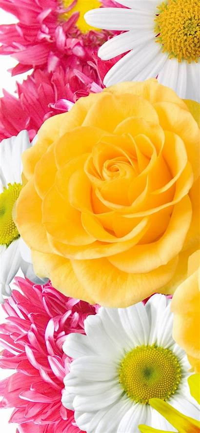 Iphone Flowers Yellow Flower Wallpapers Backgrounds Resolution