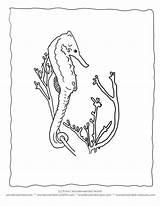 Seaweed Coloring Seahorse Ocean Drawing Outline Realistic Wonderweirded Printable Plants Wildlife Activities Getdrawings Clipart Sheets Popular Drawings 792px 85kb Forrása sketch template