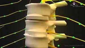3d Medical Animation Central Nervous System