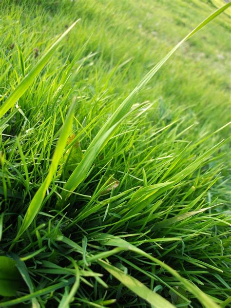How To Grow Grass In Backyard by How To Kill Grass Naturally Kill Grass In Your