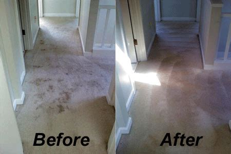 residential carpet cleaning services  mississauga