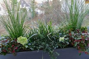 Winterharte Pflanzen Für Balkonkästen : winterharte pflanzen f r balkonk sten balkonpflanzen set f r balkonkasten 40 60 cm lang ~ Orissabook.com Haus und Dekorationen