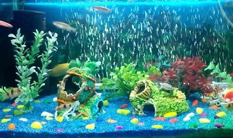 aquarium air stones      aquarium club