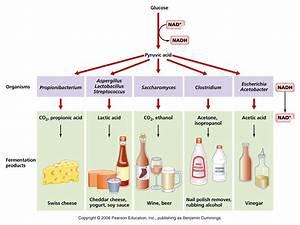 Diagram Of Fermentation Process