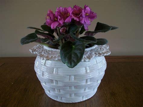 violet african watering self pot