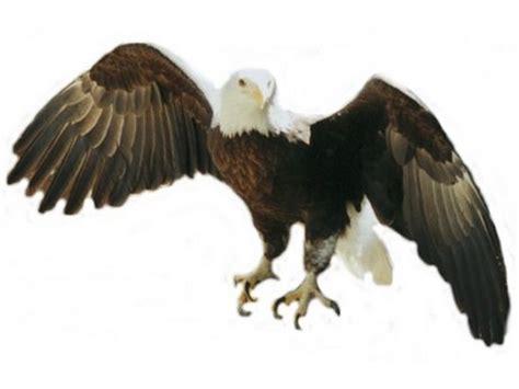 Bald Eagle Clip 16 Bald Eagle Vector Images Bald Eagle Vector Free