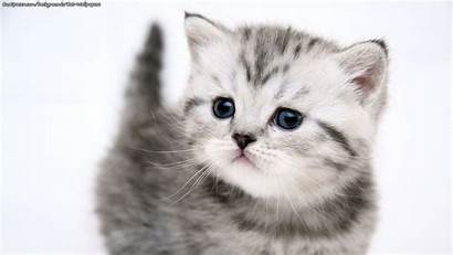 Backgrounds Kitten Cat Wallpapers Myspace Ourspacer Too