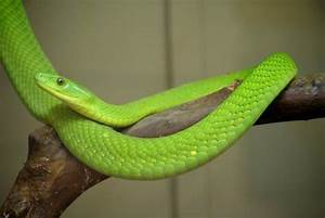 Green and Yellow Snake -Some Interesting Facts You Should Know