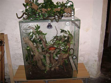 chamaeleon terrarium reptilien sonstige