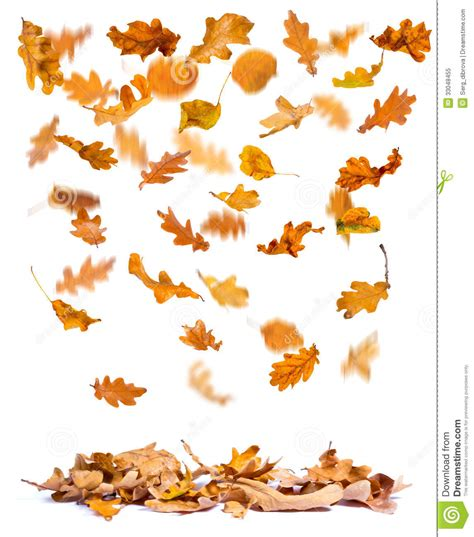 leaves  ground clipart clipground