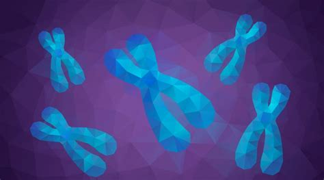 chromosome facts yourgenomeorg