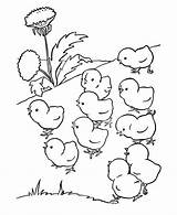 Coloring Chicken Printable Adults Popular Chick sketch template