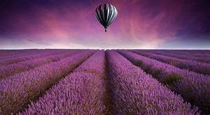 Field, Landscape, Purple, Air, Balloon, Wallpapers, Hd, Desktop, And, Mobile, Backgrounds