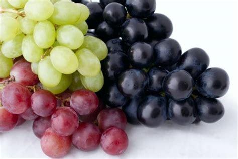reconversion professionnelle cuisine comment monder des raisins technique de cuisine