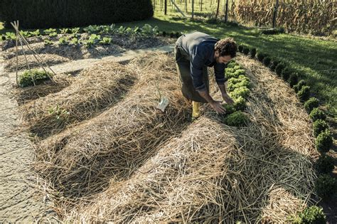 best compost for vegetable garden mulching veggie beds how and when to add mulch in