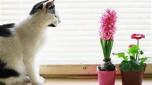 Amaryllis Giftig Für Katzen : haustiere und giftige zimmerpflanzen ~ Frokenaadalensverden.com Haus und Dekorationen