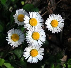 Fleur D Hiver Pour Jardinière : march aux fleurs d automne et d hiver pepinierelelann ~ Dailycaller-alerts.com Idées de Décoration