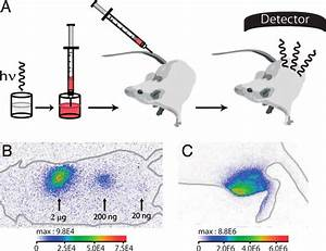 Principles Of In Vivo Experiments And First In Vivo Images