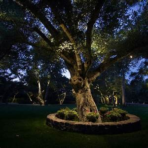 focal points With outdoor accent lighting for trees