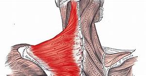 Pain Sensation  Trapezius Muscle Pain
